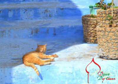 Chefchaouen---a-sleeping-cat-in-the-town