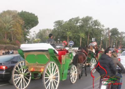 Horse-drawn-carriages-transport